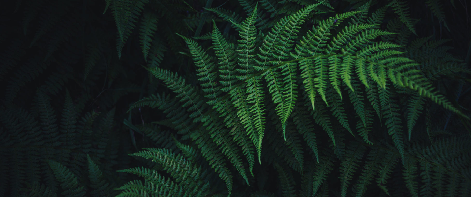 Lush Fern 3440 1440 Wallpaper 3440x1440 Wallpapers